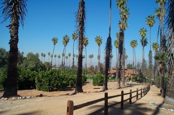 california citrus historical park